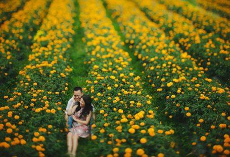 Ladang Bunga Marigold, Desa Belok, Kab. Badung, Bali