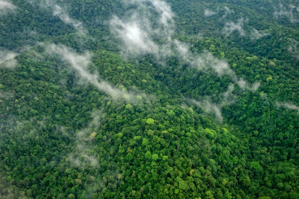 Hutan Papua, Indonesia